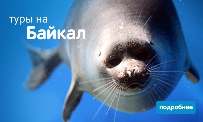 delfin-baykal